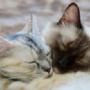 念願の猫カフェがついに秩父上陸!その名も「ねこあそび」。アニマルセラピーにどうですか?