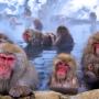 西武秩父駅併設の温泉施設『祭の湯』がそこまで流行らないと思う理由